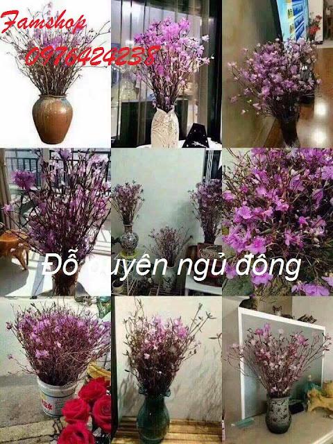 Hoa do quyen ngu dong tai Cau Giay