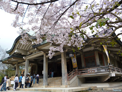 染井吉野と拝殿