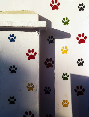 A Minimalist Photo of the paws of cats/pets shot by Samsung Galaxy S6 Smart Phone