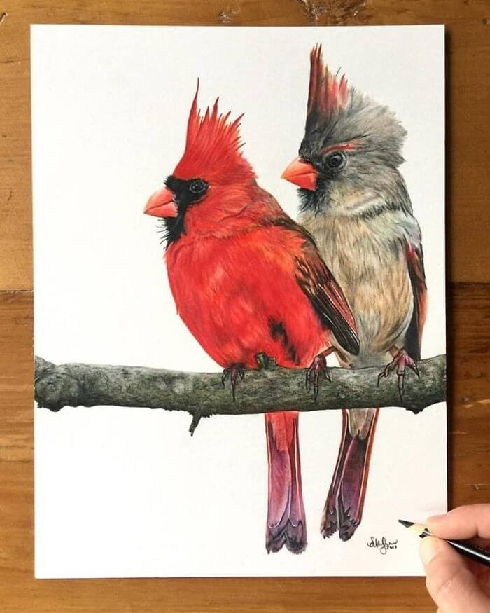 07-Cardinals-Shannon-Mayhew-Drawings-by-Domestic-and-wildlife-Animal-Artist-www-designstack-co