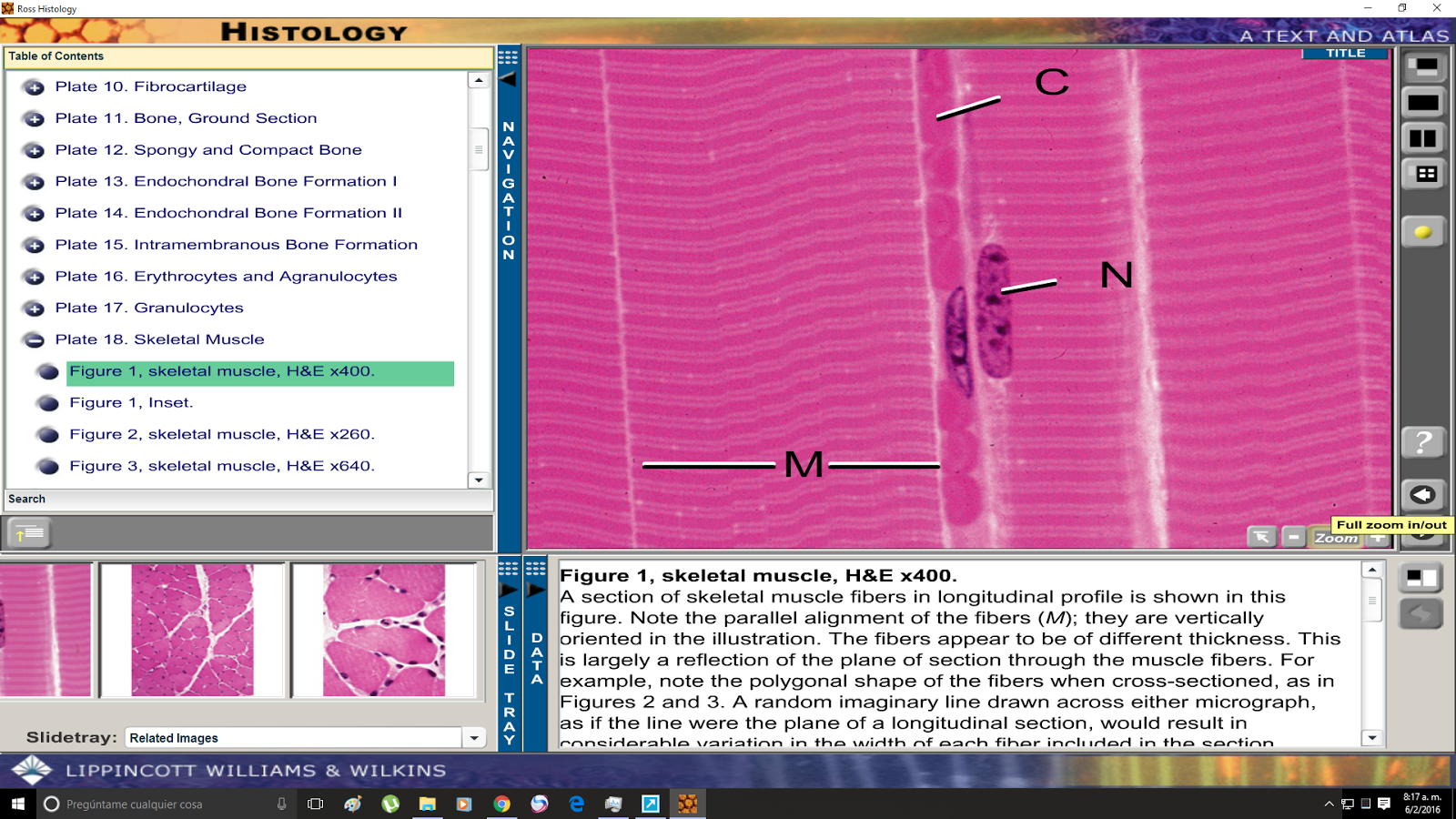 DOWNLOAD Histology A Text and Atlas PDF eBook by Durham - Issuu
