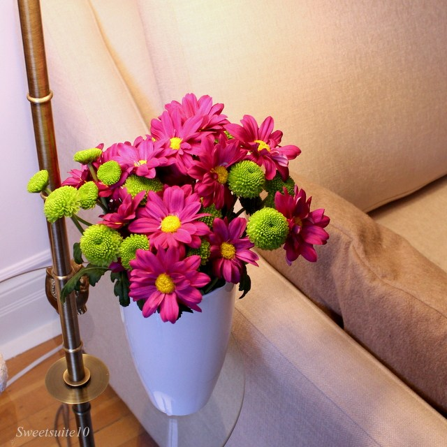 Pink and green mums on a table