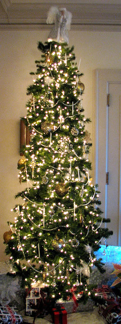 A Family Tree of Holidays  Christmas Trees 2011