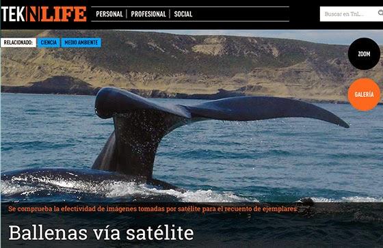 Ballenas vía satélite  ¿Se viene el censo espacial?