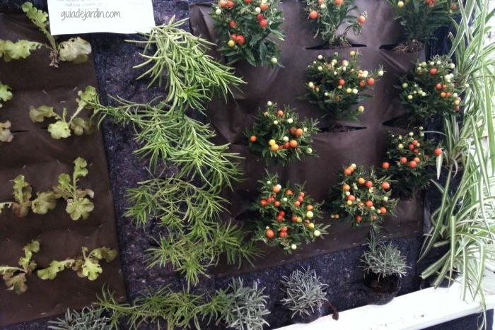 Plantas trepadoras para cultivar en macetas guia de jardin - Cortavientos de jardin ...