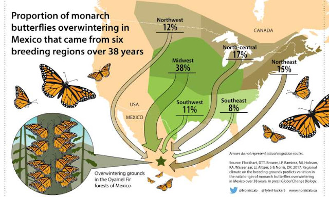 Researchers identify monarch butterfly birthplaces to help conserve species