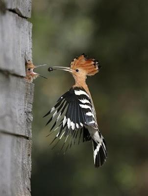 صورة غرائب وعجائب طائر يطعم اولاده