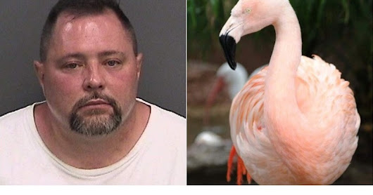 Who is Joseph Anthony Corrao who killed Pinky the Flamingo in Busch Gardens, Tampa Florida?