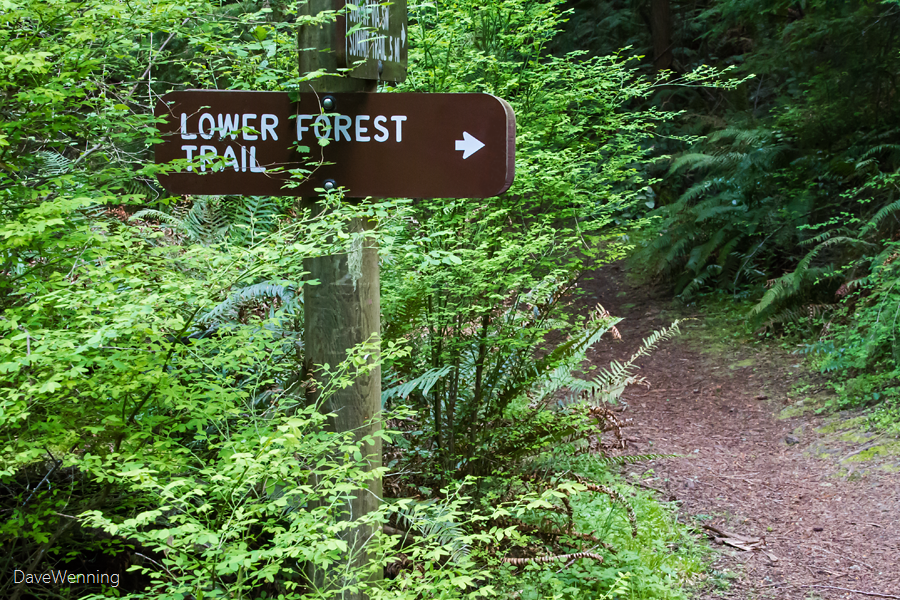 Lower Forest Trail, Deception Pass State Park