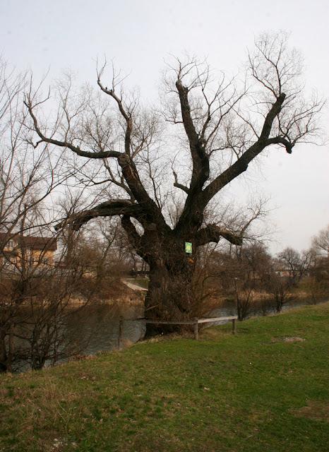 Фото Виталия Бабенко: дерево