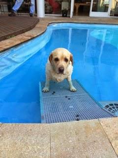 cães na água