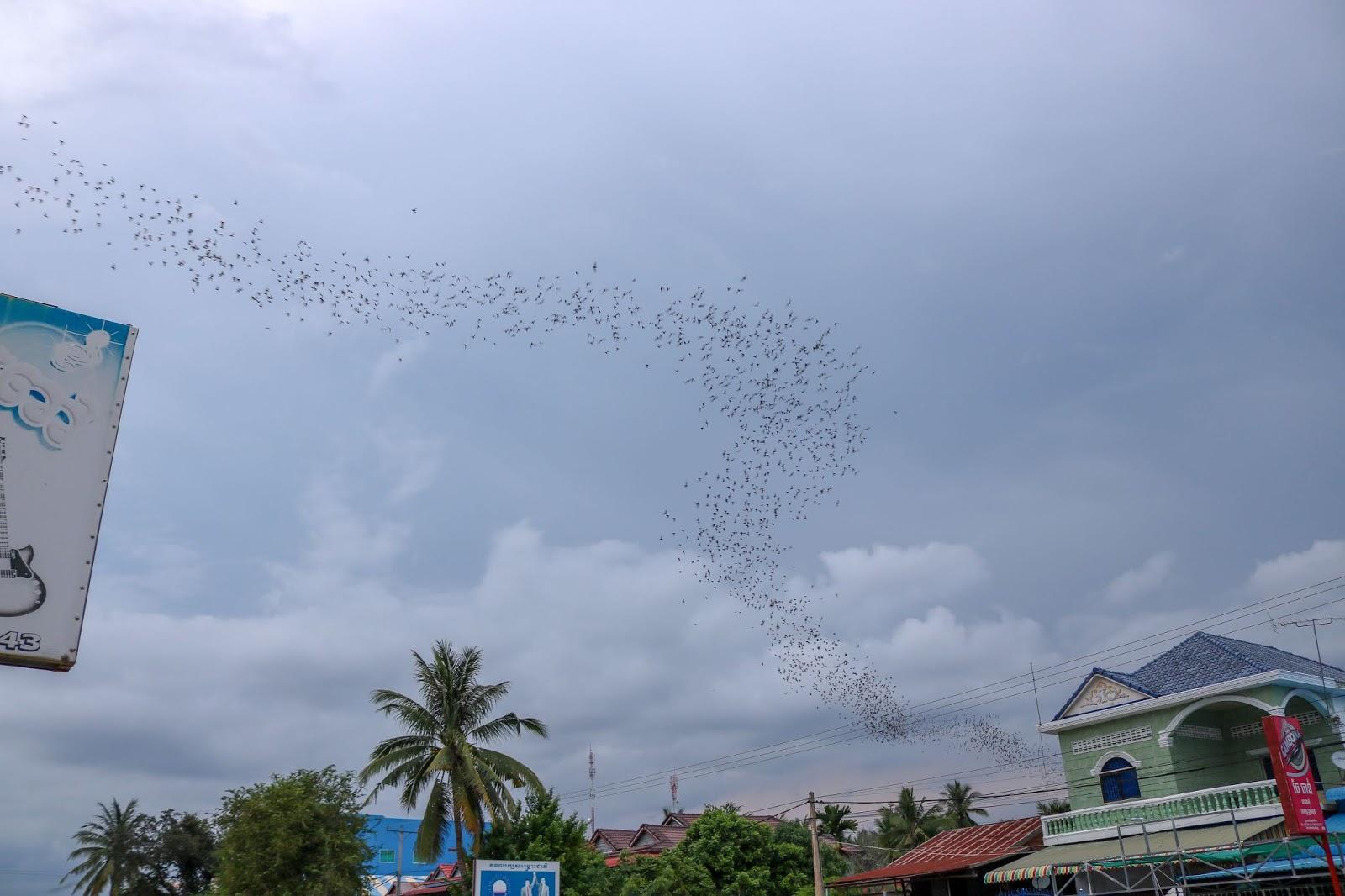 Bat Cave, Wat Phnom Sapeau