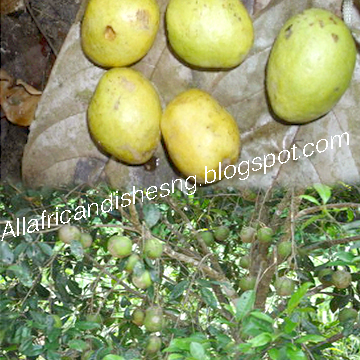 All African Dishes Benefit Of African Bush Mango