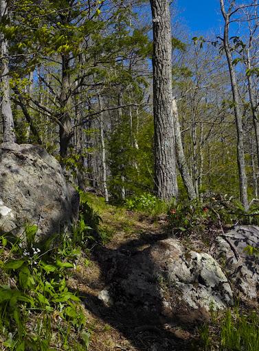 Climbing Bluff Head - Mattabesett Trail