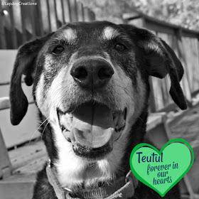 rainbow bridge dog pets rescue adopt