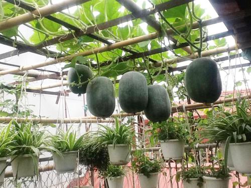 Hướng dẫn cách trồng rau sạch trên sân thượng
