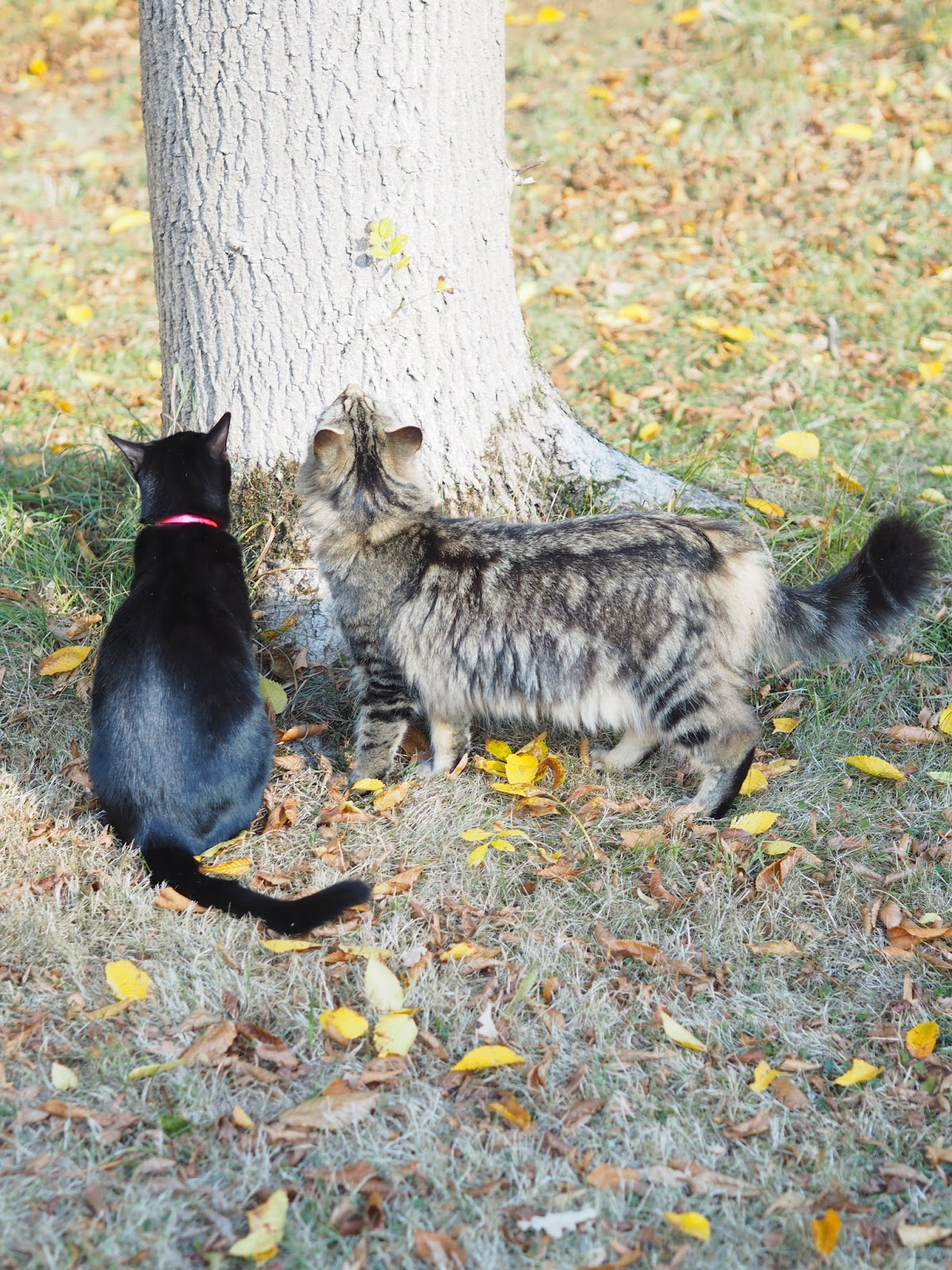 Kittens by the Tree