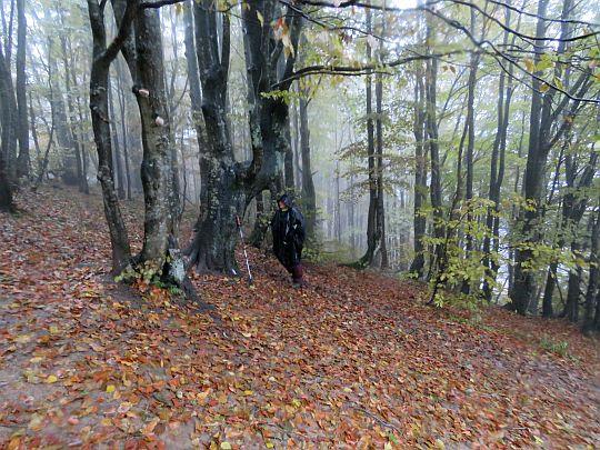 Skraj lasu poniżej połoniny Szerokiego Wierchu.