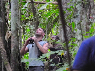 Birdwatching tour with Charles Roring in West Papua