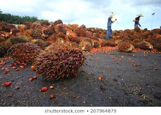 Minyak sawit merupakan edible oil terbesar didunia
