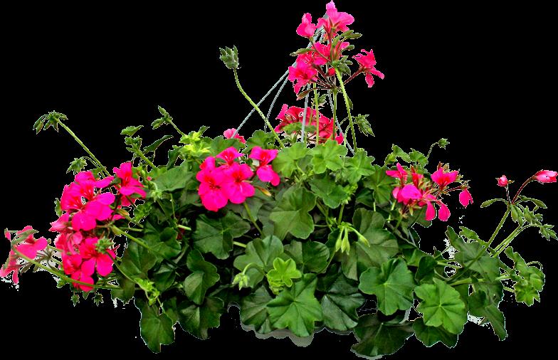 Plantas Con Flores En Png Y Sin Fondo