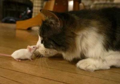 Mỡ dâng miệng mèo mà mèo không xơi