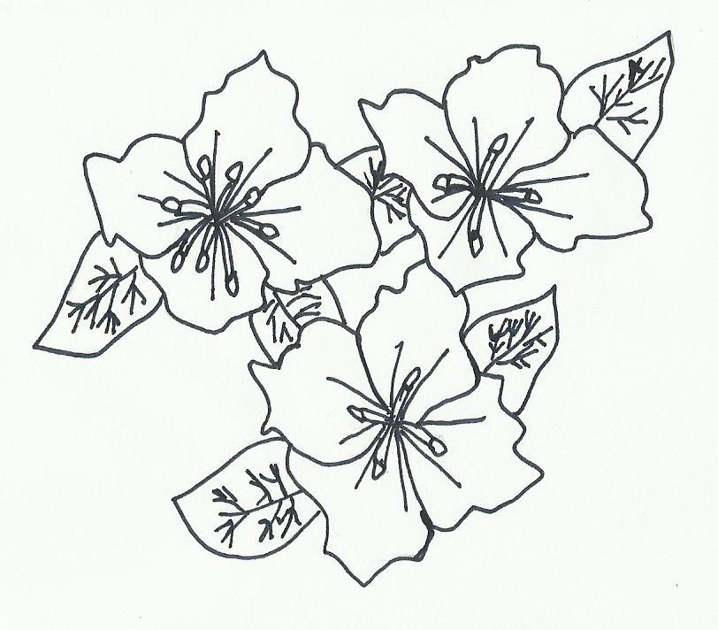 Imagenes Y Dibujos Para Colorear Dibujos Flores Jazmin Y