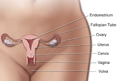 Vulvar Cancer Picture Images