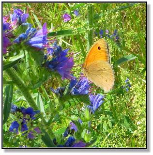 """Schmetterling """"Brauner Waldvogel"""""""