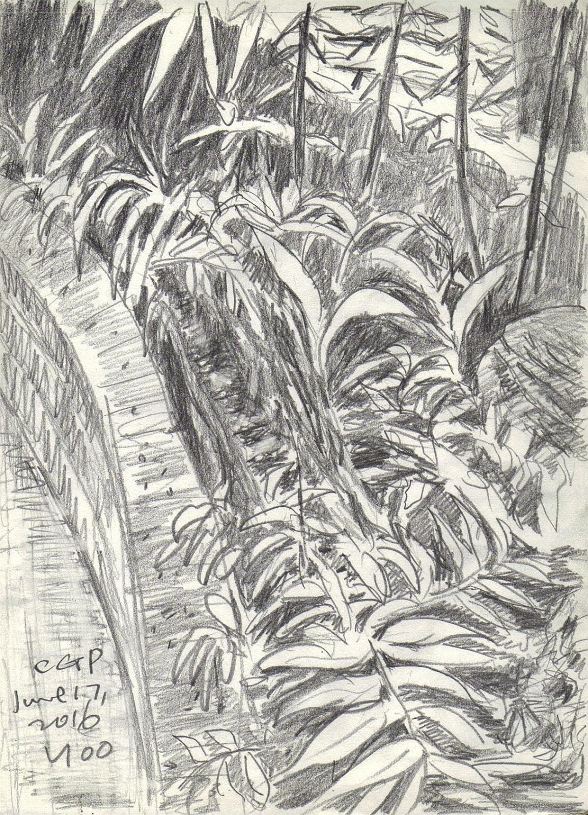 Pencil sketch in botanical garden childrens grand park