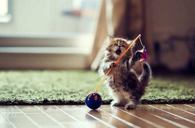 Beautiful Kitten Wallpapers