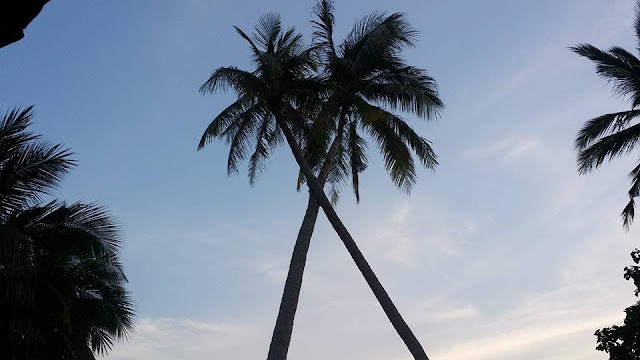 Palm trees in Thailand