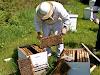 Γιατί δε βγάζουν μέλι τα μελίσσια μου