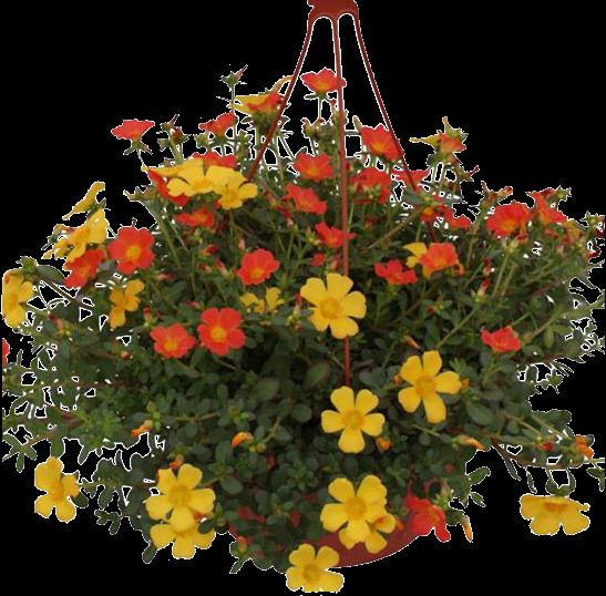 Plantas colgantes para tus jardines en png for Jardines sin plantas