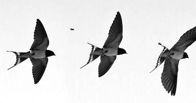 Download Percuma Suara Pemikat Burung Walet