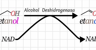 efectos del alcohol etilico en el cuerpo humano