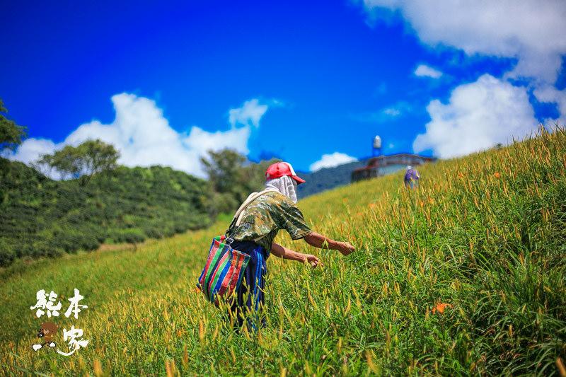 臺灣小瑞士 六十石山金針花季 花蓮富里賞花~俯覽花東縱谷景點   Trip-Life熊本一家の旅攝生活