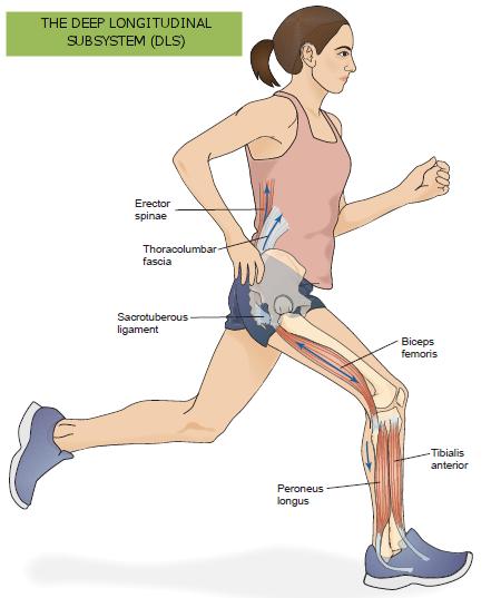 Valoración del movimiento y prescripción de ejercicio: EL SUBSISTEMA ...