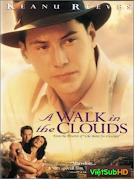Dạo Bước Trên Mây
