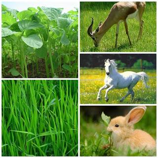 materi ajar ipa manfaat tumbuhan, hewan untuk manusia dan lingkungan secara umum