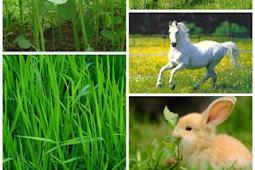 Manfaat Tumbuhan Dan Hewan Bagi Manusia Dan Lingkungan