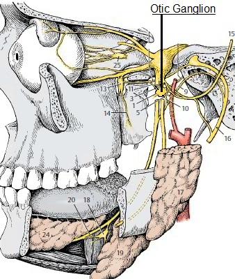 Science, Natural Phenomena & Medicine: Otic Ganglion