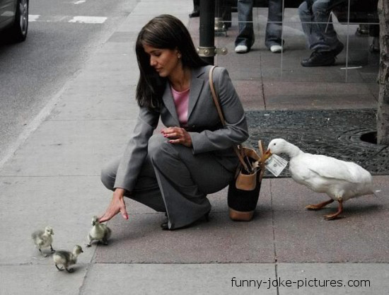 Funny Duck Pickpocket Money Picture