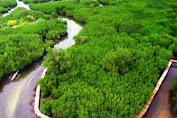 Bontolebang Unggulkan Hutan Mangrove, Diving Dan Wisata Keramba