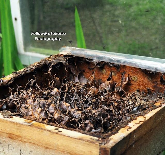 Close Up Of Kelulut Nest Structure