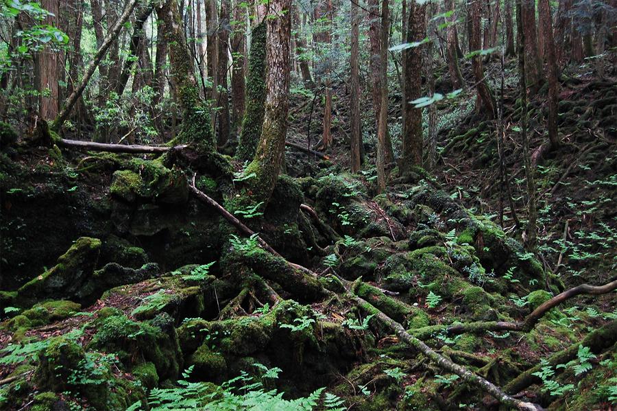Он отвез в лес и заставил фото 330-179