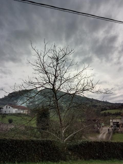 Árbol y casas de fondo en La camocha