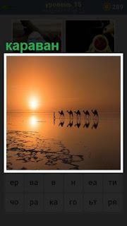в свете заката видны силуэты каравана из верблюдов