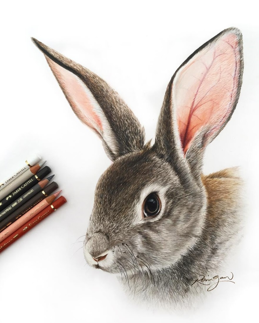 09-Grey-Rabbit-Robin-Gan-Realistic-Color-Pencil-Animal-Drawings-www-designstack-co