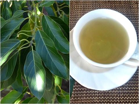 manfaat daun alpukat sebagai obat sakit pinggang